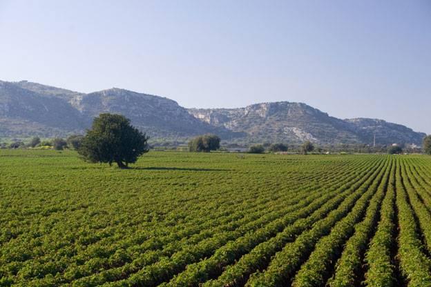 Azienda Agricola Percossi patate di Avezzano